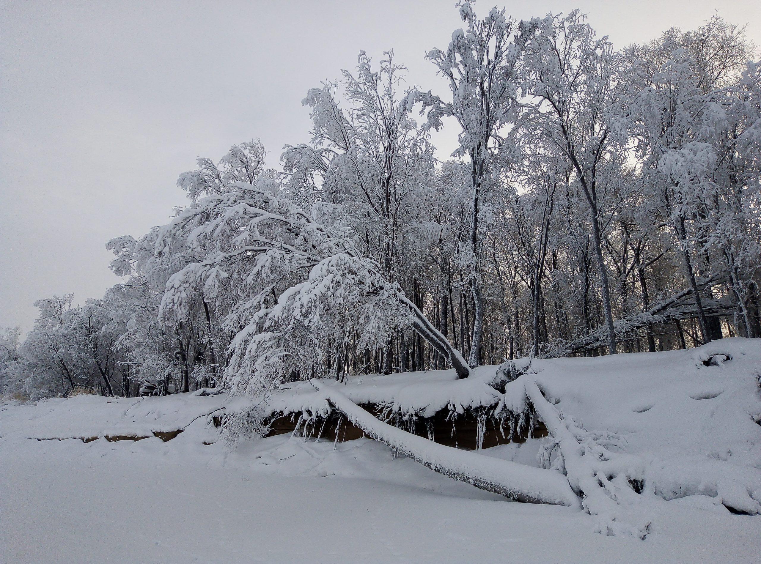 3 МЕСТО 3Дивная зима Целикова Виктория 1 курс дизайн